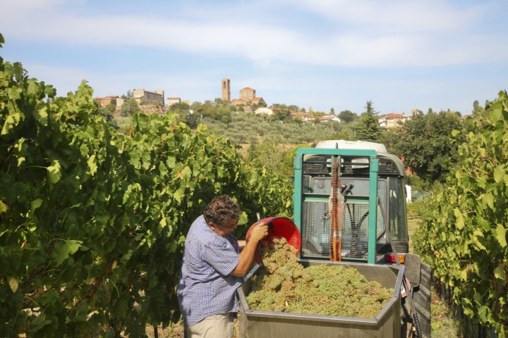 "Grape harvest, Coriano<br /><a href=""http://static.riviera.rimini.it/tl_files/gallerie/orig/coriano-vendemmia.jpg.zip"" target=""_blank"" class=""photo-download"">Download high resolution image</a>"