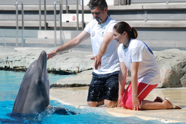 """Oltremare, dolphins. Riccione<br /><a href=""""http://static.riviera.rimini.it/tl_files/gallerie/orig/dsc_00443.jpg.zip"""" target=""""_blank"""" class=""""photo-download"""">Download high resolution image</a>"""