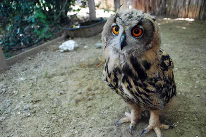 """Oltremare, owl. Riccione<br /><a href=""""http://static.riviera.rimini.it/tl_files/gallerie/orig/gufini1.jpg.zip"""" target=""""_blank"""" class=""""photo-download"""">Download high resolution image</a>"""