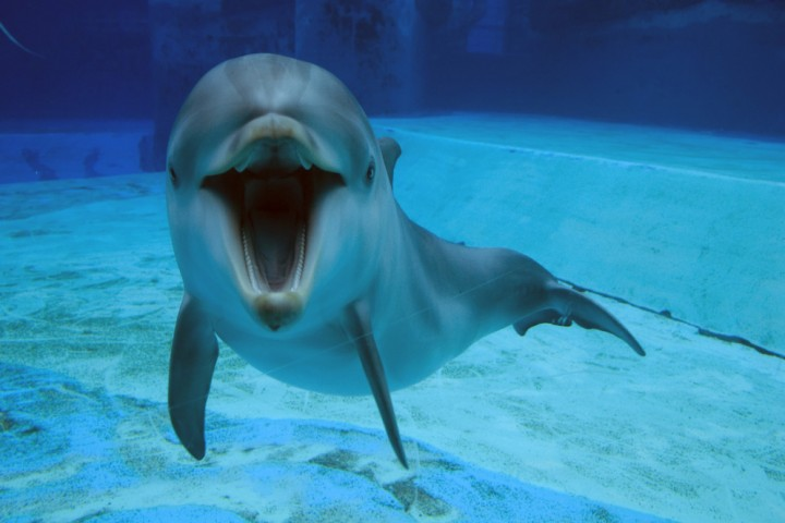 """Oltremare, dolphins. Riccione<br /><a href=""""http://static.riviera.rimini.it/tl_files/gallerie/orig/zeus_oltremare.jpg.zip"""" target=""""_blank"""" class=""""photo-download"""">Download high resolution image</a>"""