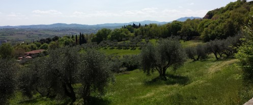 On foot in the hills of Covignano